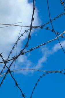 Free Barbed Royalty Free Stock Photos - 2934768