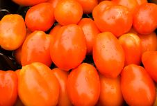 Free Tomatoes Stock Images - 2935424