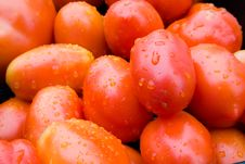 Free Tomatoes Stock Images - 2935454