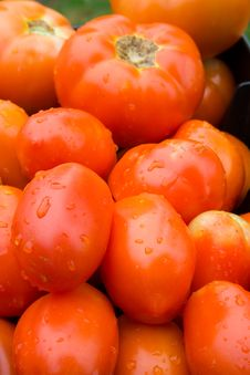 Free Tomatoes Royalty Free Stock Image - 2935476