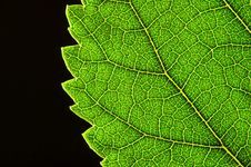 Free Green Leaf Edge Stock Photography - 2936802