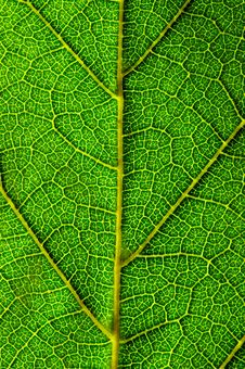 Free Vertical Green Leaf Texture Stock Photo - 2936810