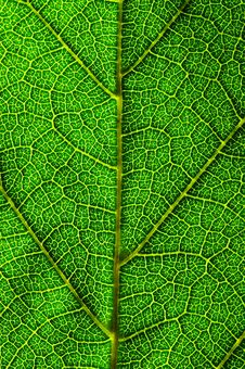 Free Vertical Green Leaf Texture Stock Photos - 2936843