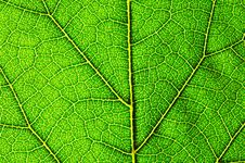Free Horizontal Green Leaf Texture Royalty Free Stock Images - 2936859