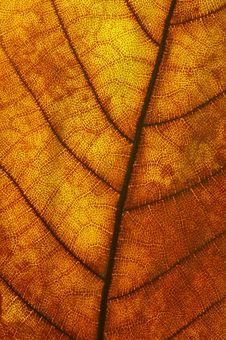 Free Red Leaf Texture Stock Photo - 2936970