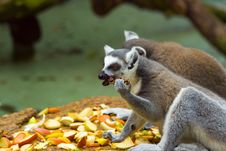 Free Lemurs Royalty Free Stock Photo - 2937015