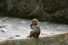 Free Baboons Stock Photography - 2937872