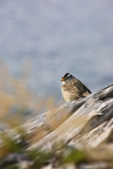 Free Bird Sitting On Driftwood Stock Photo - 2937910