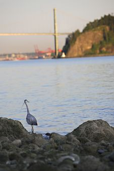 Free Blue Heron Bridge Background Royalty Free Stock Image - 2937916
