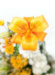 Free Lilies Stock Photo - 29302280