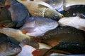 Free Fresh Fish Stock Photography - 29326782