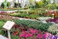 Free Seedlings Of Seasonal Flower Royalty Free Stock Photo - 29327835