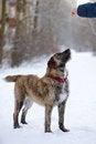 Free Portrait Of A Shaggy Dog/ Stock Photo - 29331520