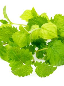 Free Mint And Lemon Balm Stock Image - 29334831