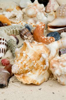 Free Shell Background Stock Photos - 29334853