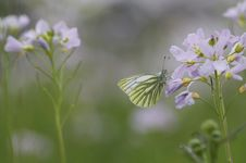 Free Butterfly Between Flowers Royalty Free Stock Photography - 29337037