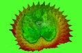 Free Leaf Detail Stock Image - 29344901