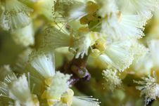 Free A Train Of Microscopic Pollenation Stock Photos - 29346173