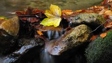 Free Autumn Leaves In A Stream Stock Image - 29349021