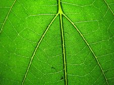 Free Green Leaf Texture Stock Photography - 29349042