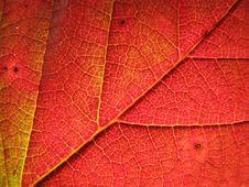 Autumn Blackberry Leaf Royalty Free Stock Photo