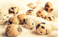 Free Quail Eggs. Healthy Eating Royalty Free Stock Images - 29354339