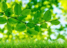 Free Green Grass And Bokeh Lights Stock Photos - 29352713