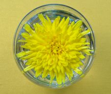Free Yellow Chrysanthemum In Glass Royalty Free Stock Photography - 29354197