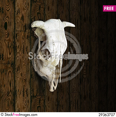 Free Cow Skull Royalty Free Stock Photography - 29363707