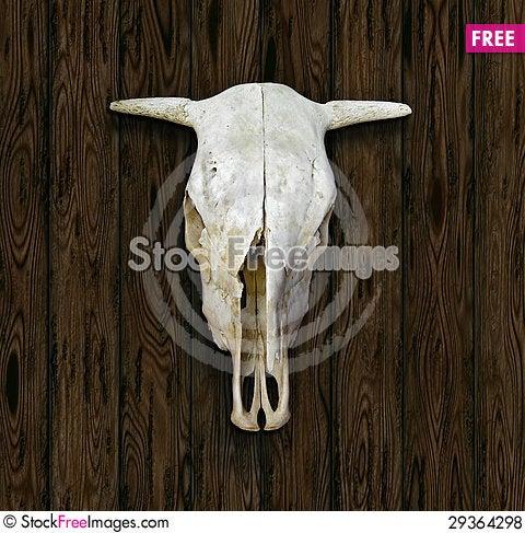 Free Cow Skull Royalty Free Stock Photos - 29364298
