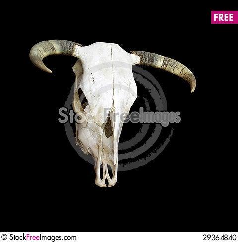 Free Cow Skull Stock Photo - 29364840