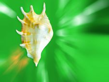 Free Sea Shell Royalty Free Stock Image - 29363946