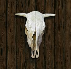 Free Cow Skull Royalty Free Stock Photos - 29364298