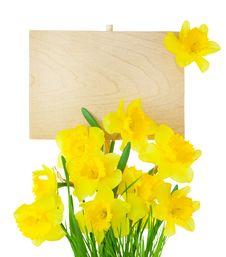 Narcissus &x28; Daffodil &x29; And Empty Sign For Message / Isolated Royalty Free Stock Photography