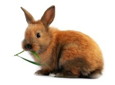Free Easter Bunny Eating Stock Photo - 29367720