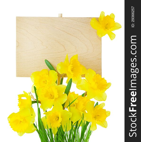 Narcissus &x28; Daffodil &x29; and Empty Sign for message / isolated