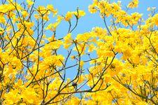 Free Flowers Royalty Free Stock Photos - 29371618