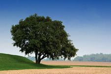 A Single Tree Stock Photo