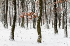 Free Winter Forest Royalty Free Stock Photography - 29380907
