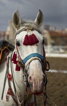 Free Traditional Anatolian Jereed Horse Royalty Free Stock Images - 29385039