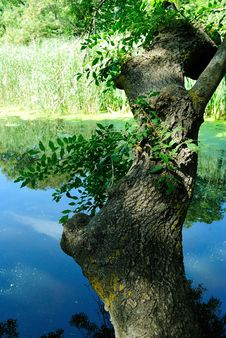 Free Tree By Water Stock Photo - 29387870