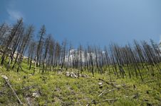 Free Forest Fire Aftermath Royalty Free Stock Photo - 29394025