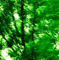 Free Green Texture 148 Royalty Free Stock Photography - 2944857