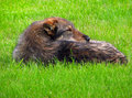 Free Dog On The Grass Royalty Free Stock Photos - 2946018