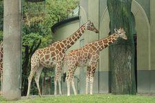 Free Animal Royalty Free Stock Image - 2940186