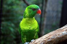 Free Colorful Parakeet Stock Images - 2940334