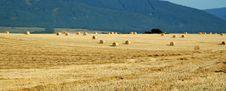 Free Hay Bales Royalty Free Stock Image - 2941026