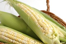 Free Fresh Corn Royalty Free Stock Image - 2942126
