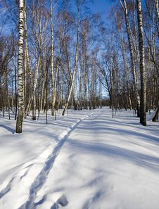 Free Frosty Winter Day Stock Images - 2942934