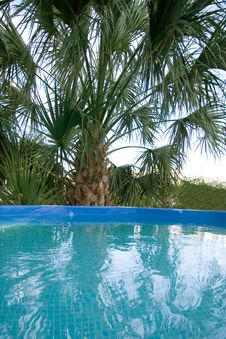 Free Palm And Pool Royalty Free Stock Photo - 2943075